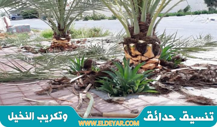 تكريب النخيل بالدمام عن طريق أفضل معلم تقليم نخيل وتنظيف نخيل وتنسيق حدائق في الشرقية
